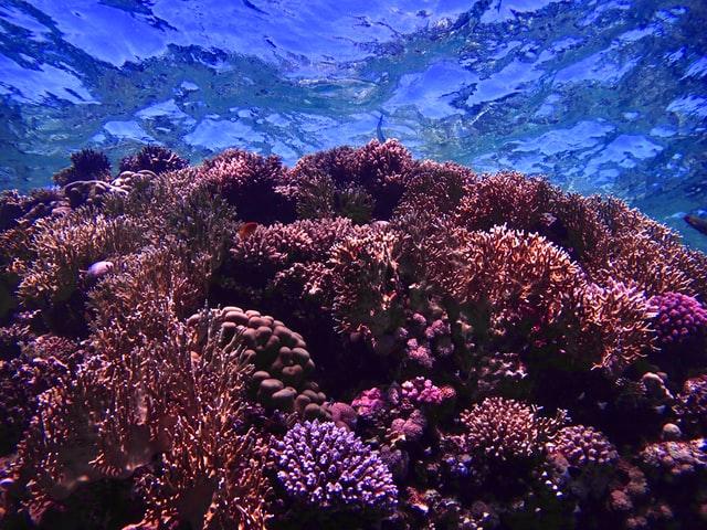 Bahshar Reef